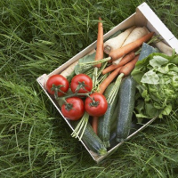 crate of assorted vegetables on grass